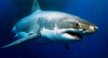 Kentucky mağarasında 330 milyon Yıl Önce'den Kalma Köpekbalığı Kalıntıları Bulundu